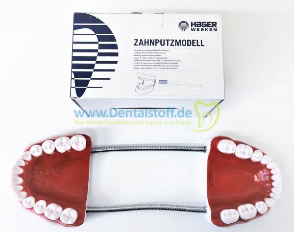 Zahnputzmodell mit Zahnbürste